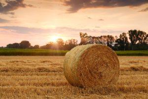 公務員の副業に農業や不動産を選ぶのは無理です